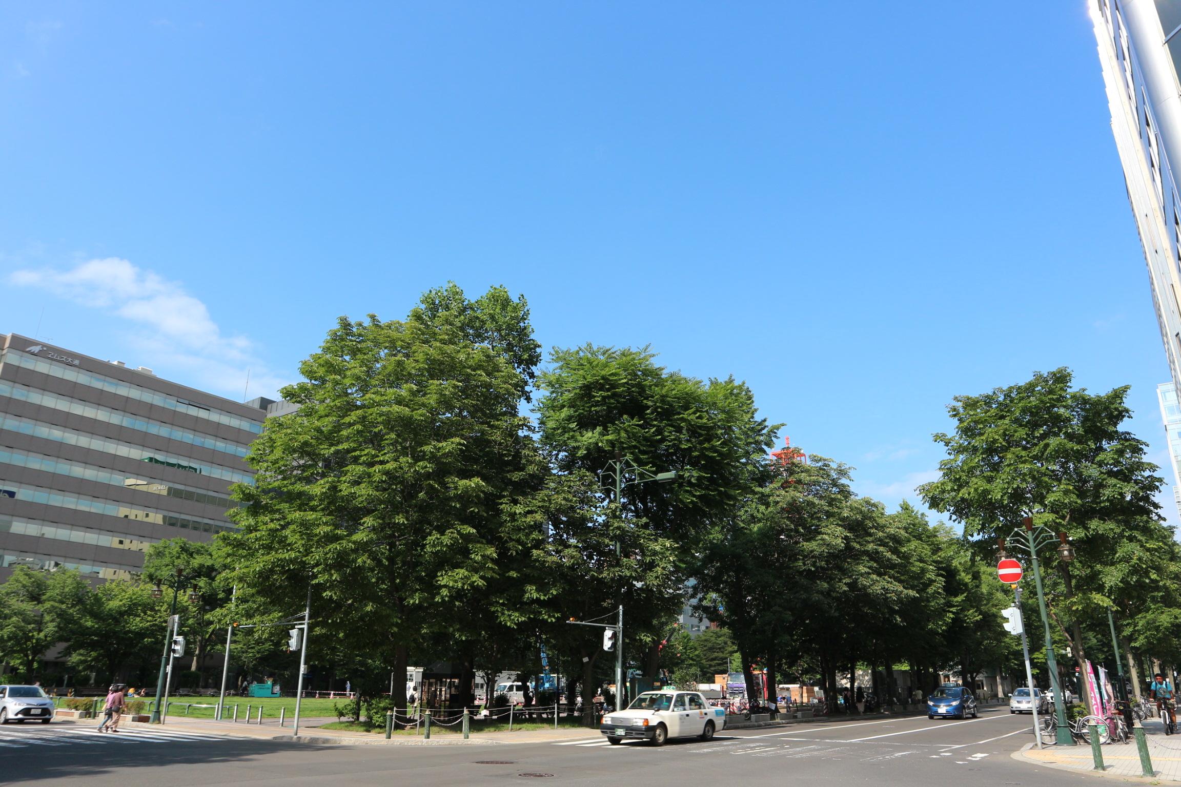 初夏の大通公園
